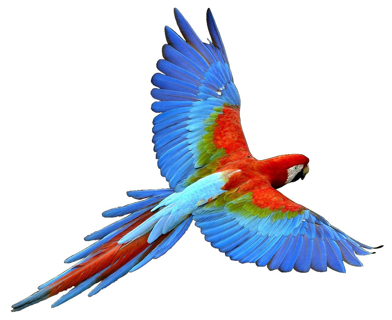 Clipart rainbow parrot. Nineteen isolated stock photo