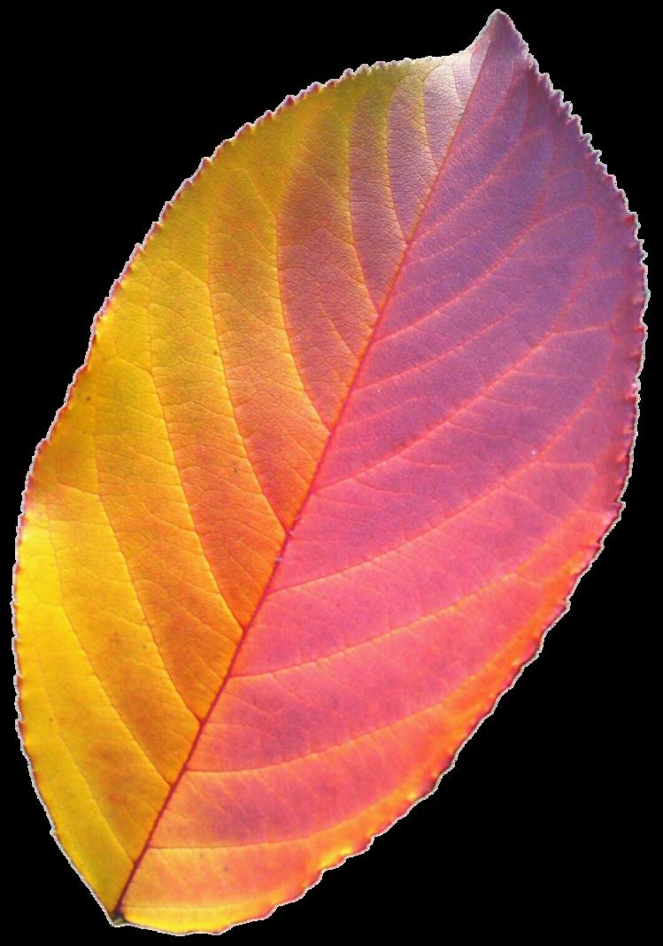 Leaf by jeanicebartzen on. Clipart rainbow tea