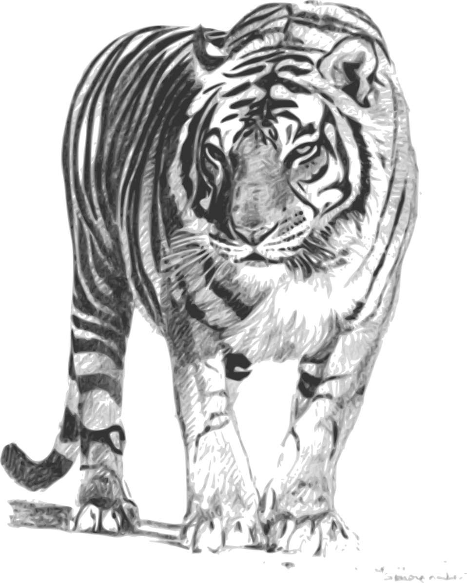 White shop of library. Clipart tiger file