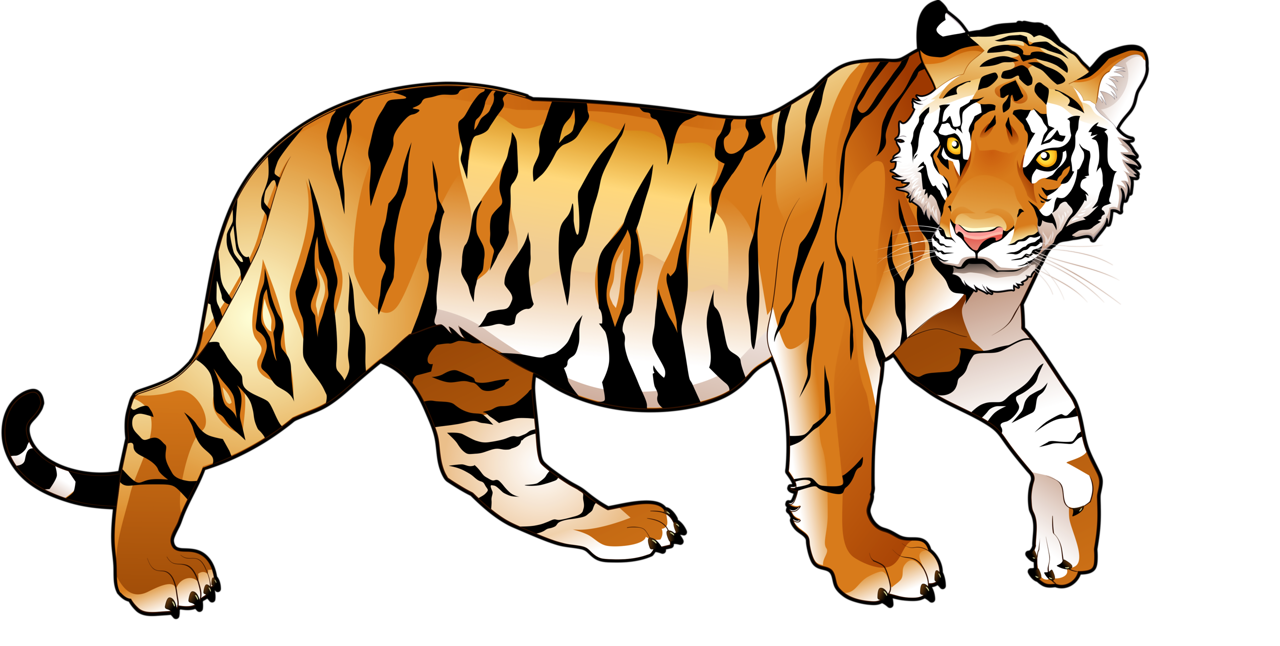Clipart tiger muscle.  png pinterest animal