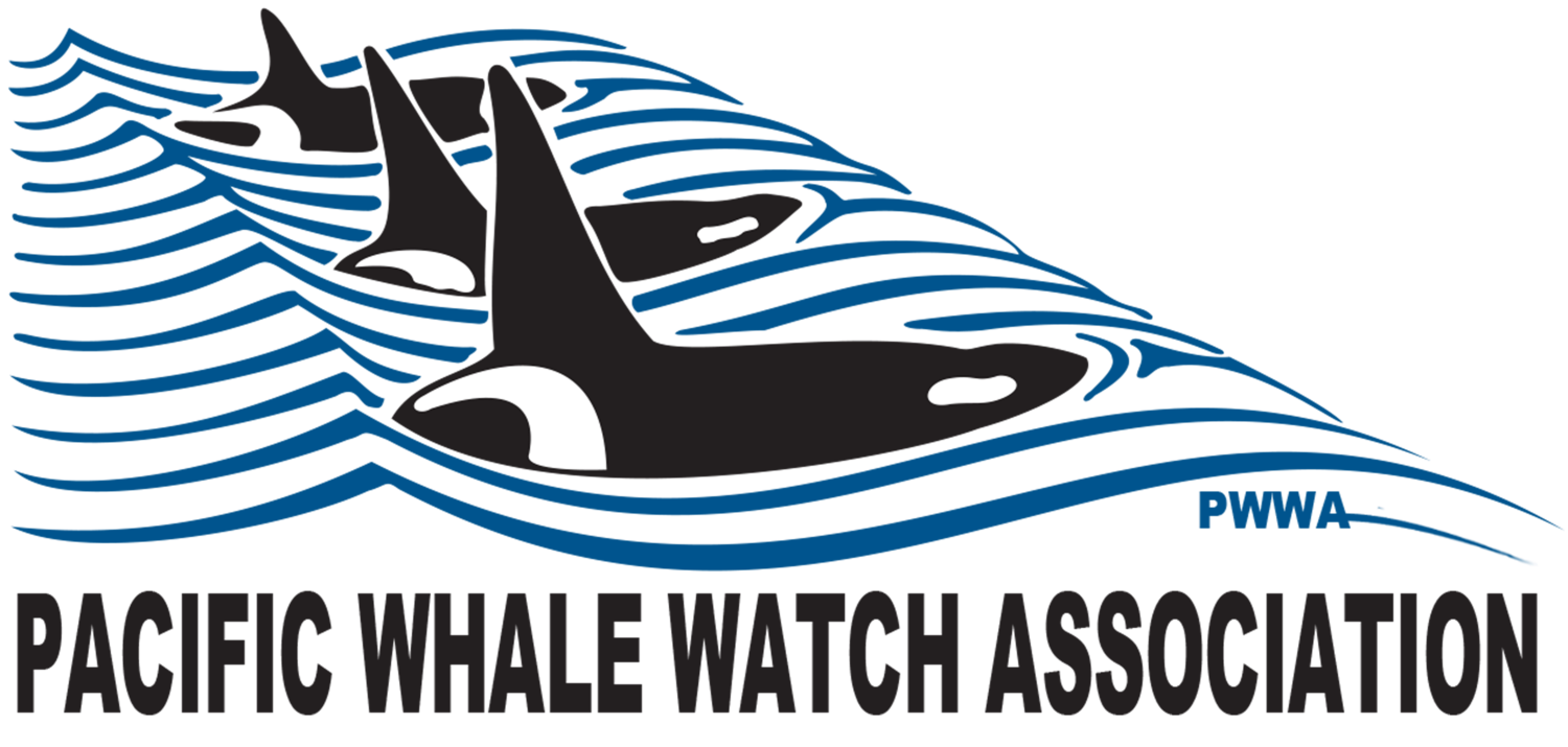 Clipart whale southern right whale. Guidelines pacific watch association