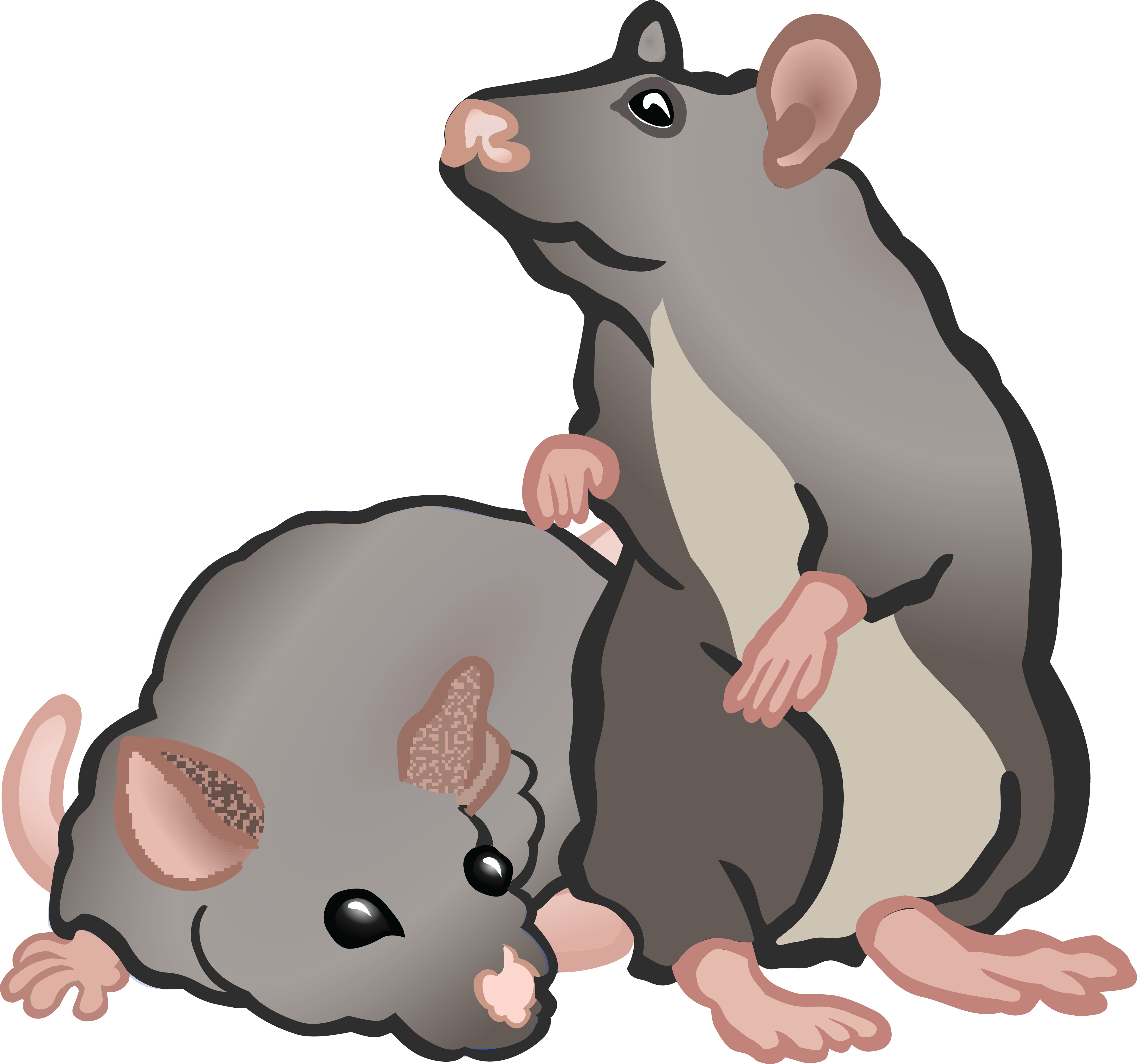 Hole clipart rat. Rodent at getdrawings com
