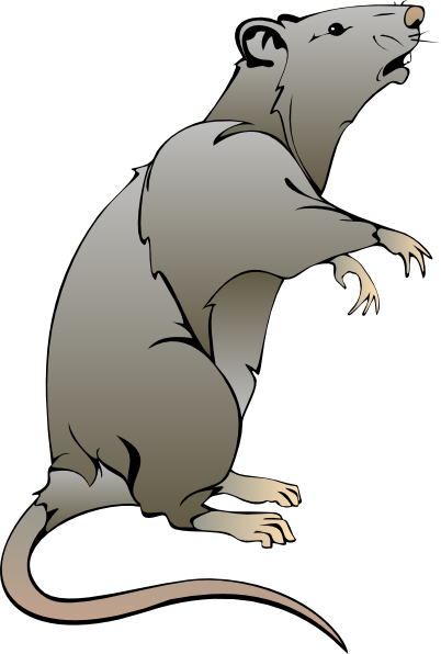 Clipart rat. Clip art free panda