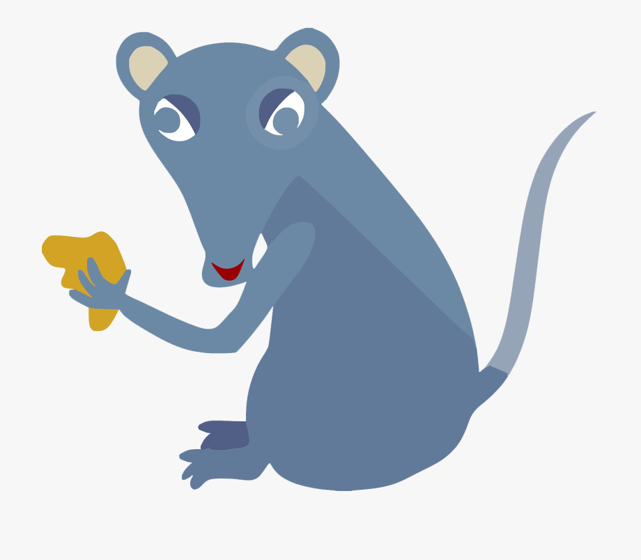 Rat clipart animal eating. Image mouse cheese