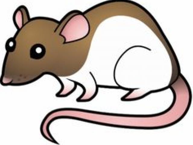 Clipart rat artistic. Free download clip art