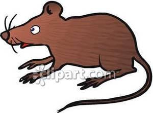 Rat clipart big rat. Curious brown royalty free