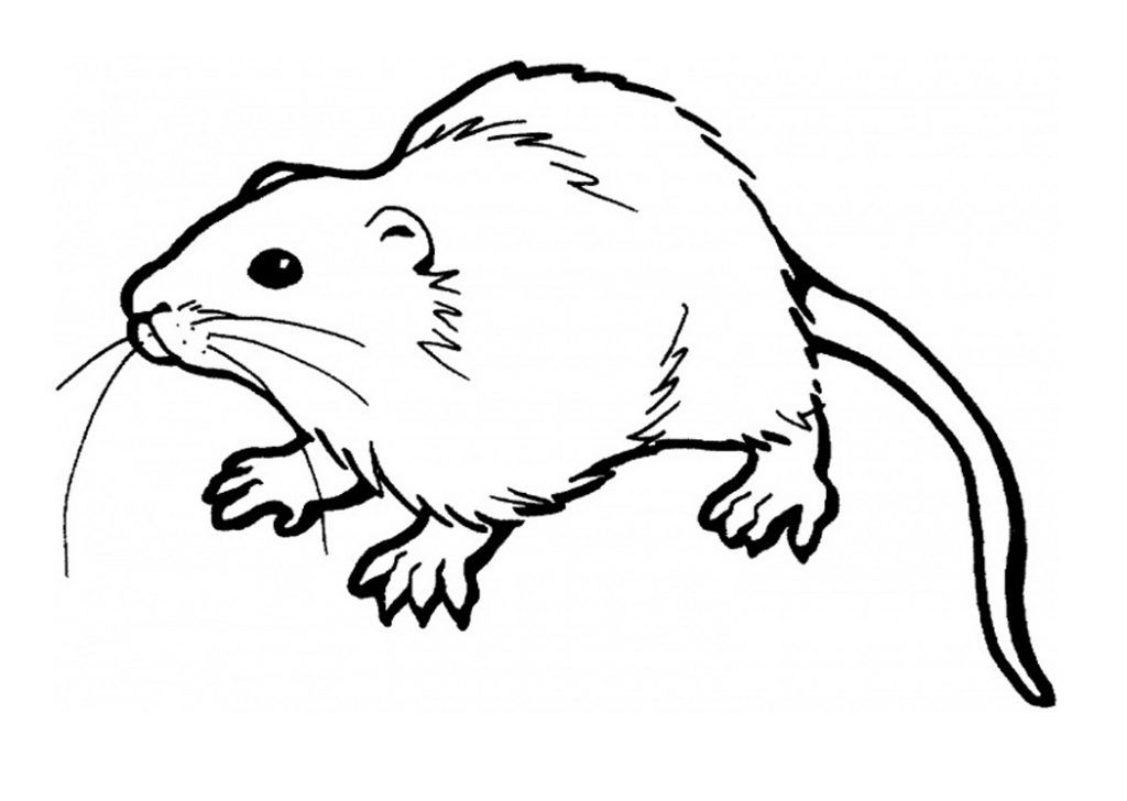 Free printable coloring pages. Clipart rat brown colour