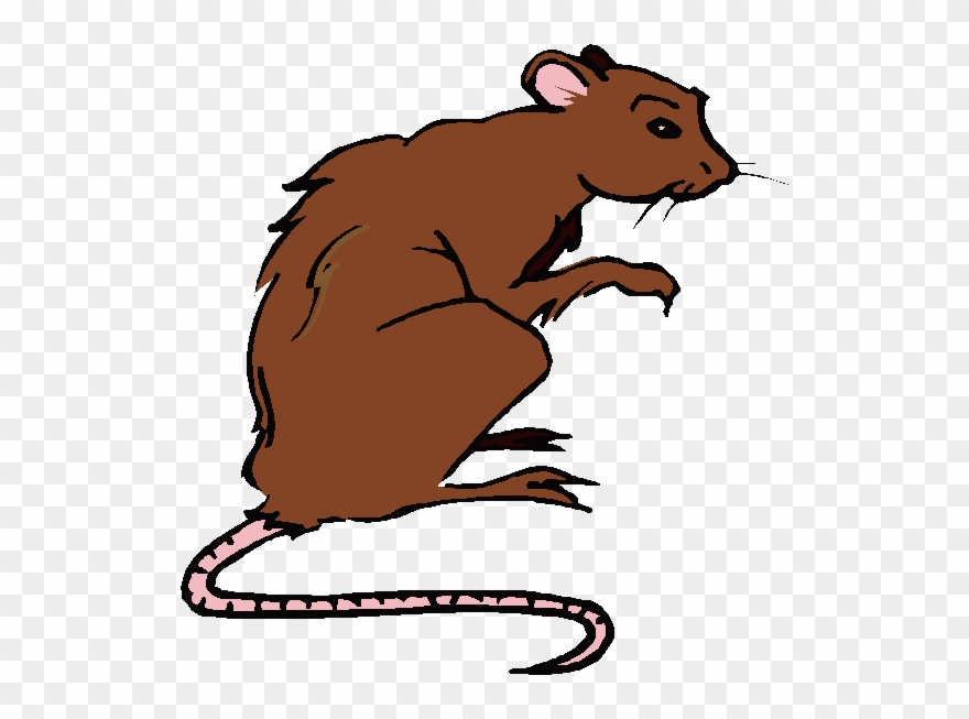 Drawing rodent clip art. Clipart rat brown colour