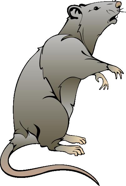 Cartoon drawings clip art. Clipart rat comic