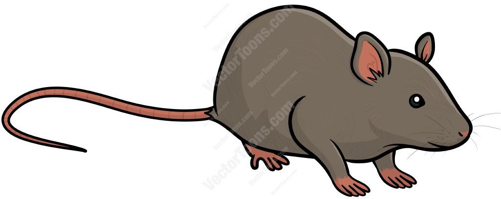 Free download best on. Clipart rat grey rat