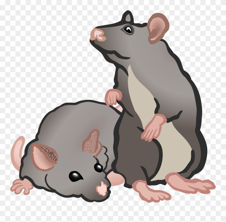 Rat clipart group rat. Free of rats or