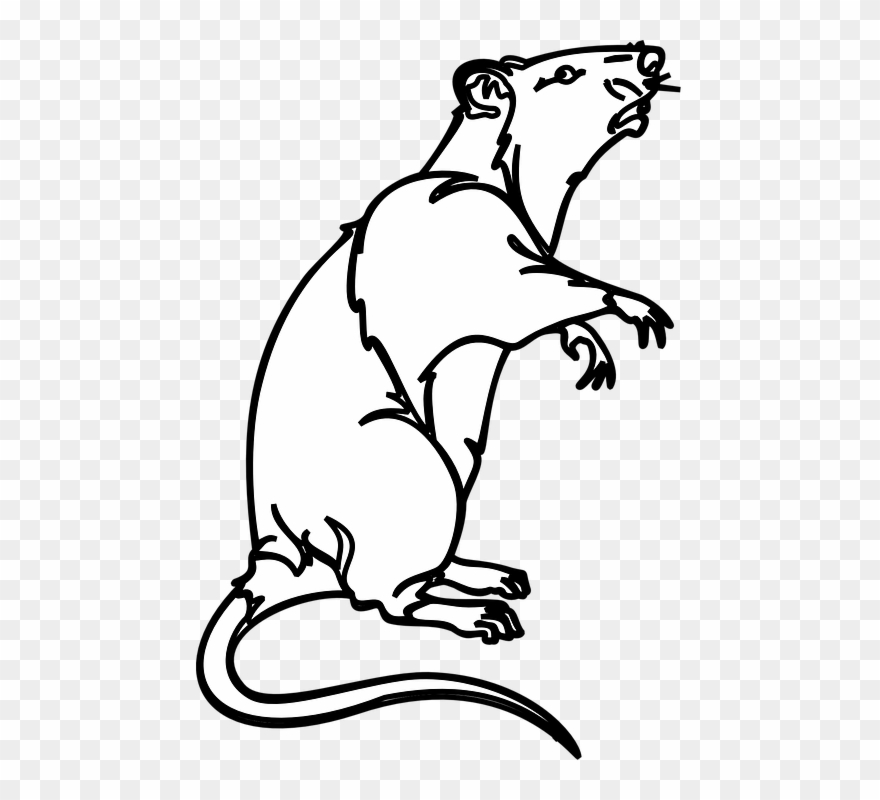 Clipart rat huge. Collection of white mouse