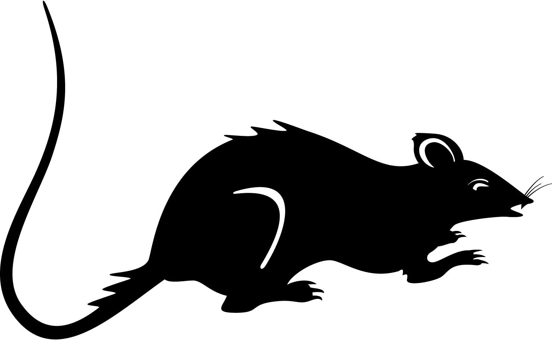 Clipart rat jpeg. Clip art free images