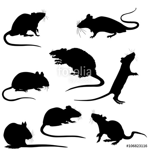 Silhouette of a rats. Clipart rat jpeg