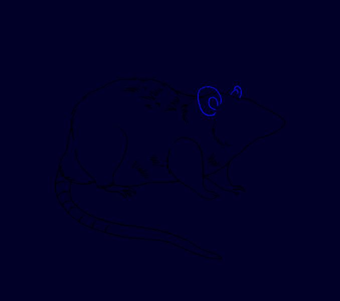 Clipart rat kangaroo rat. How to draw a