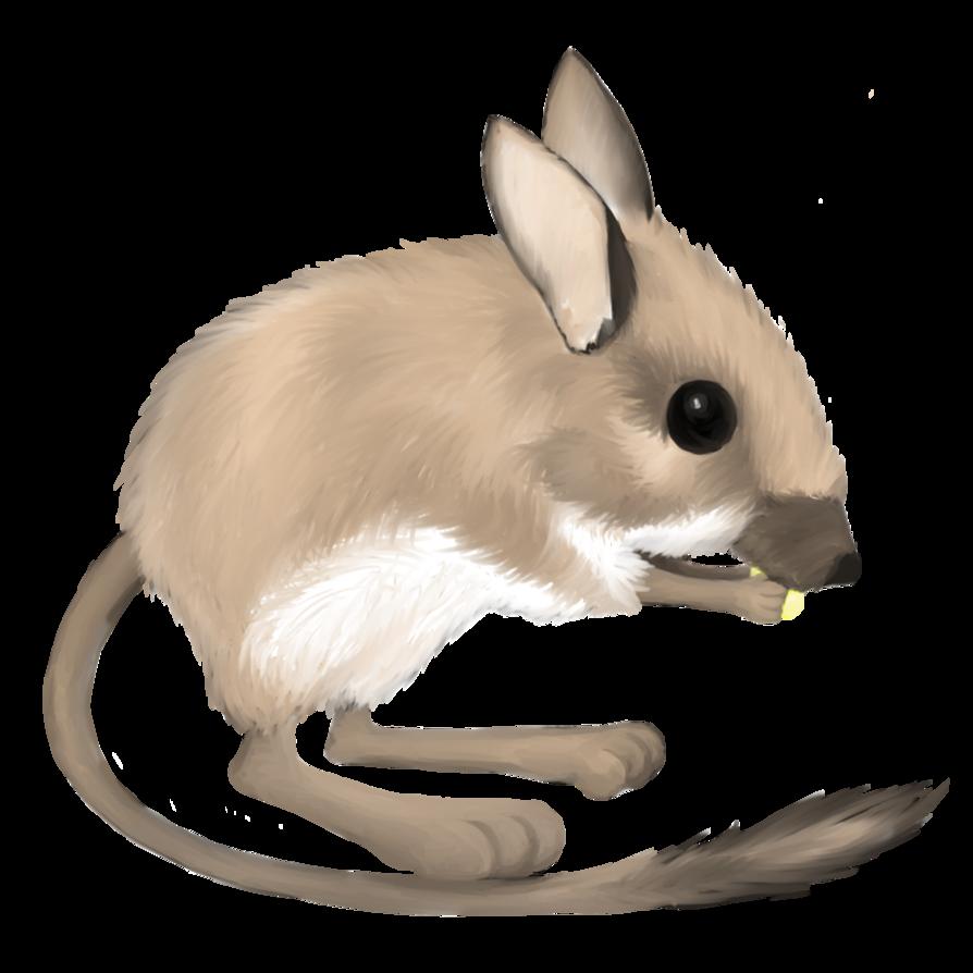 By lusta on deviantart. Clipart rat kangaroo rat