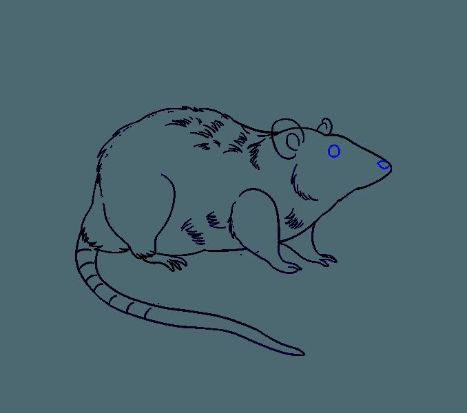 Drawing at getdrawings com. Clipart rat line art