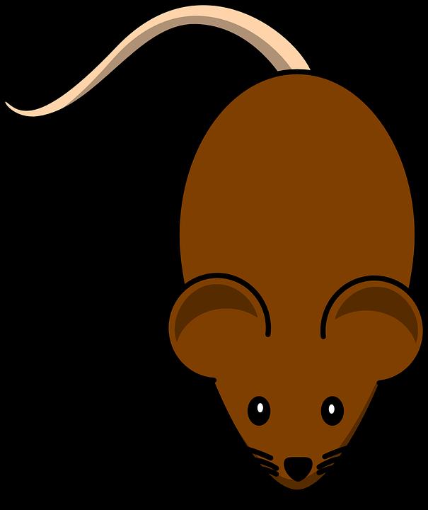 Clipart rat line art. Tikus free on dumielauxepices
