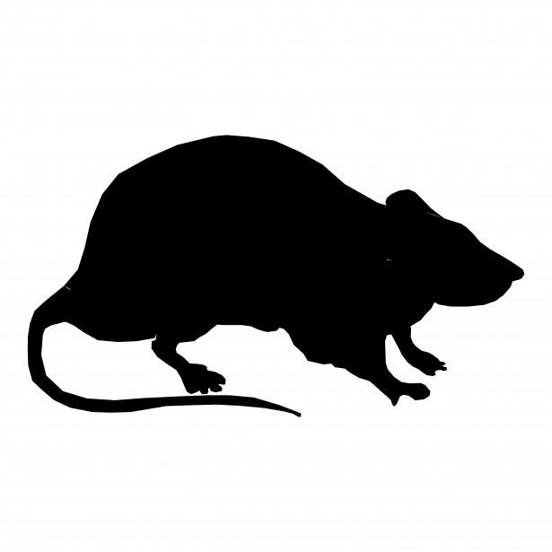 Silhouette free stock photo. Rat clipart public domain