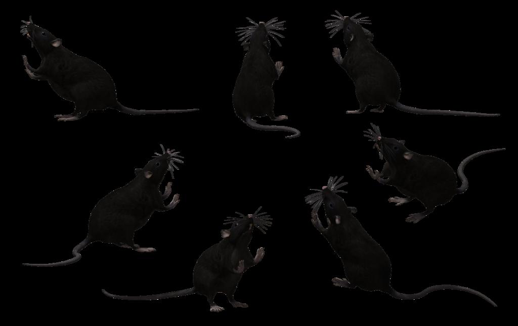 Clipart rat rat tail. Black set by free