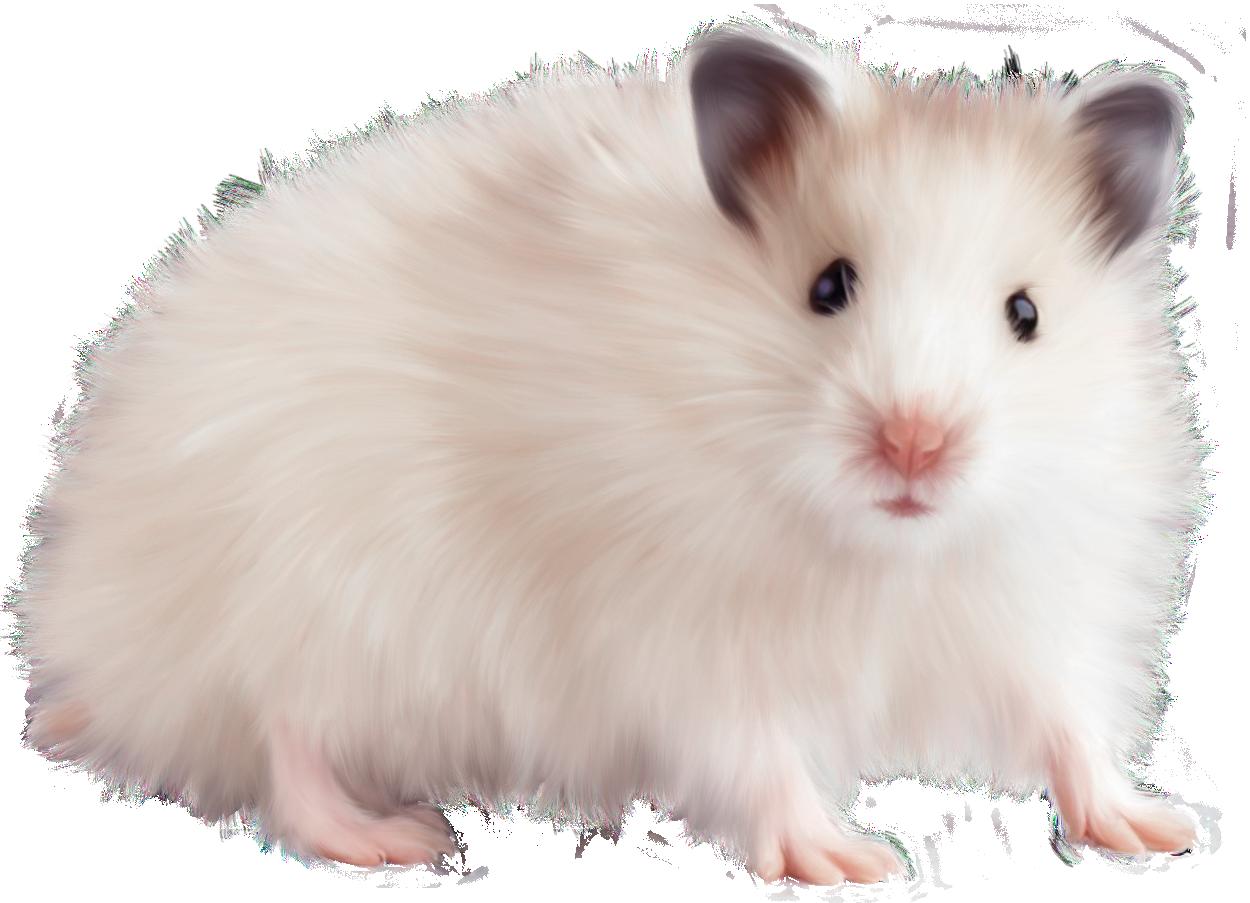 Hamster clipart hamster food. Rat mouse transparent png