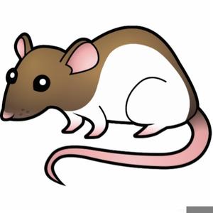 Rats free images at. Rat clipart public domain