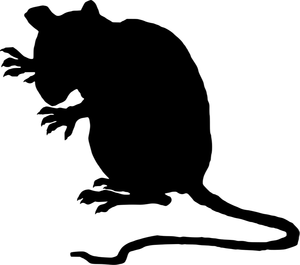 Clipart rat sewer rat. Free rodent download clip