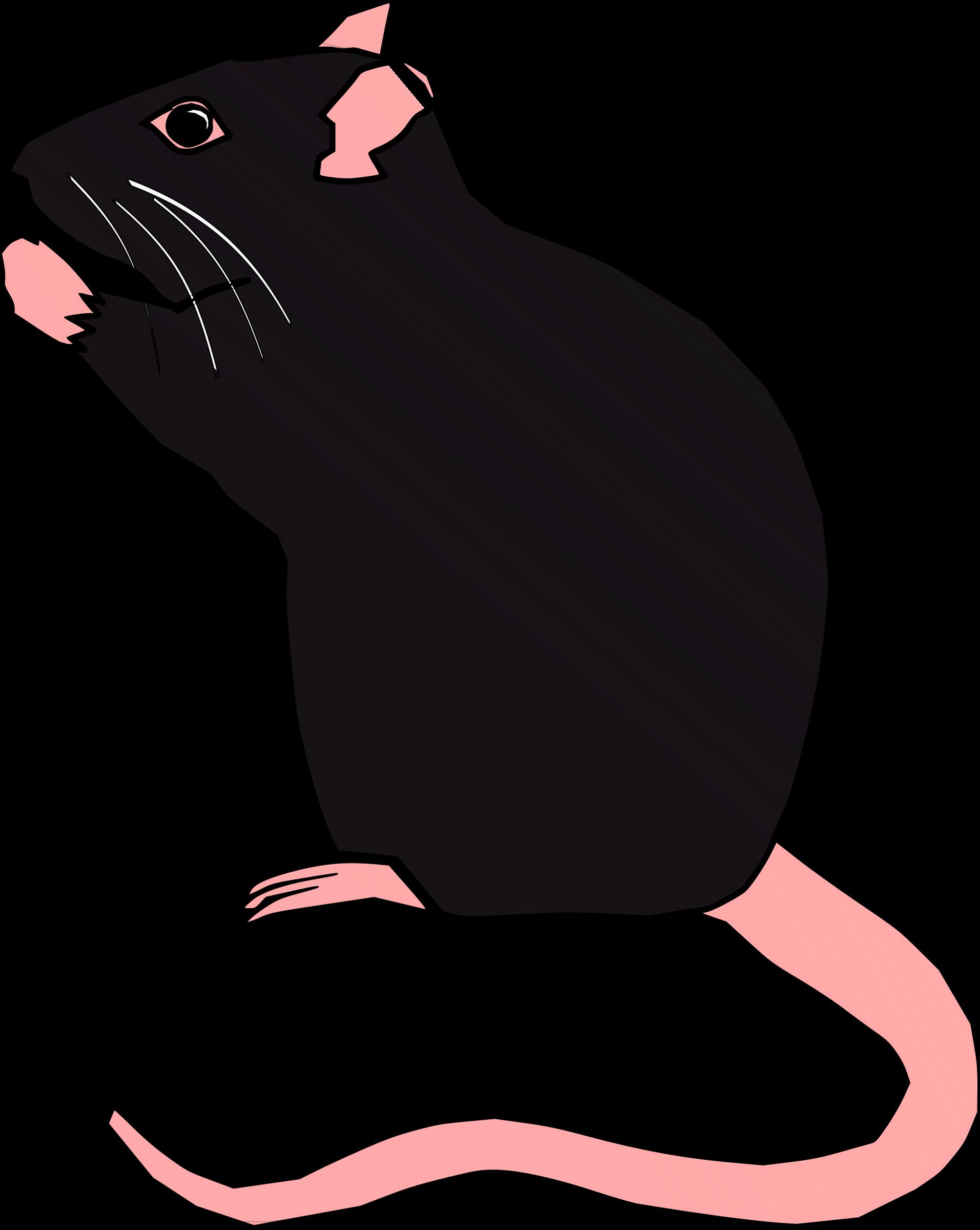 Ratx by hartmut a. Clipart rat smart