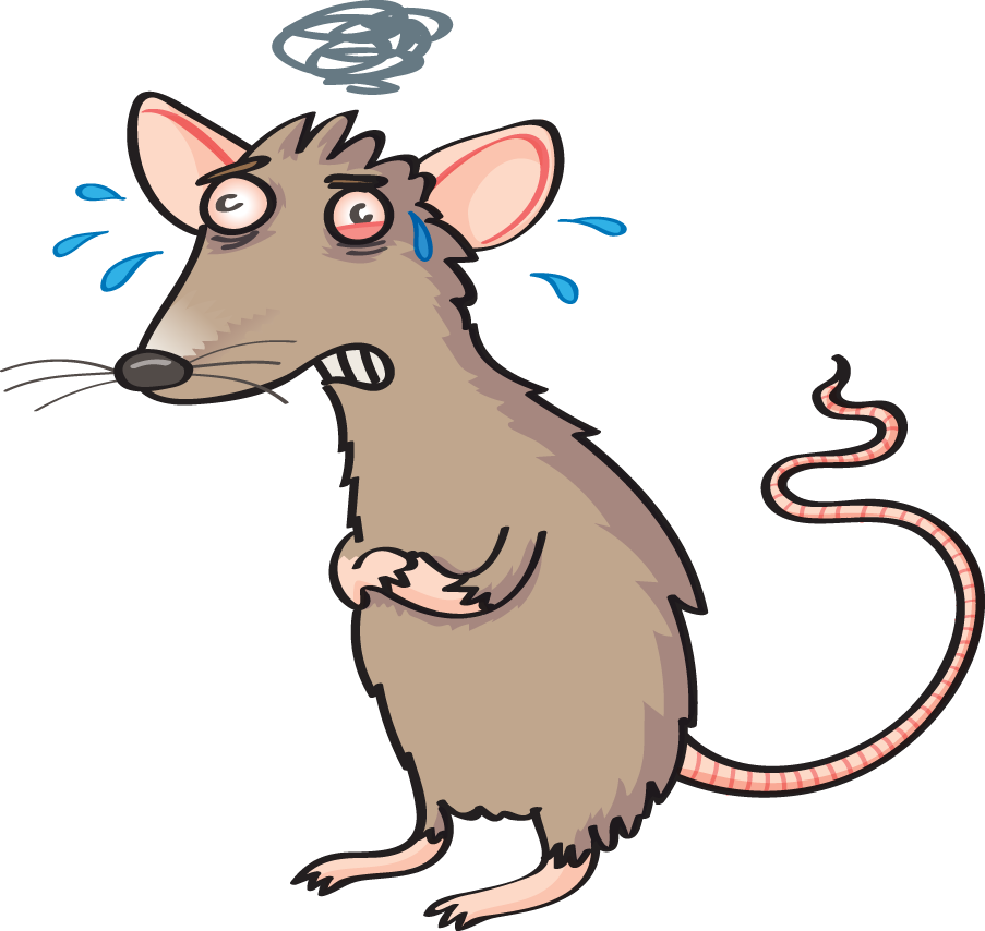 Clipart rat stressed. Out nature reviews cancer