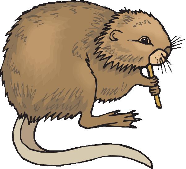 Groundhog clipart gopher. Coypu eating clip art