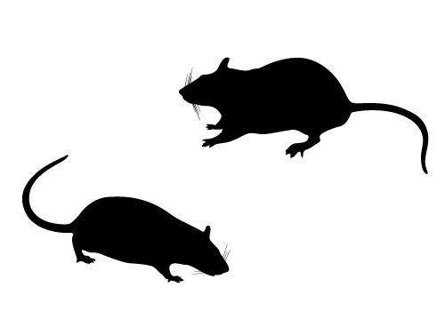 Vector free download . Rat clipart silhouette