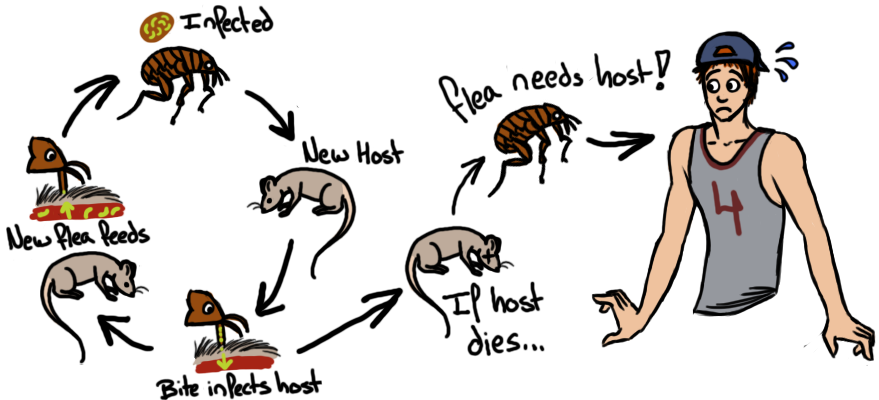 The plague biogeekery life. Clipart rat yersinia pestis