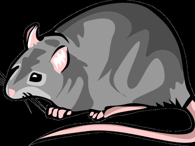 Black death frames illustrations. Clipart rat yersinia pestis