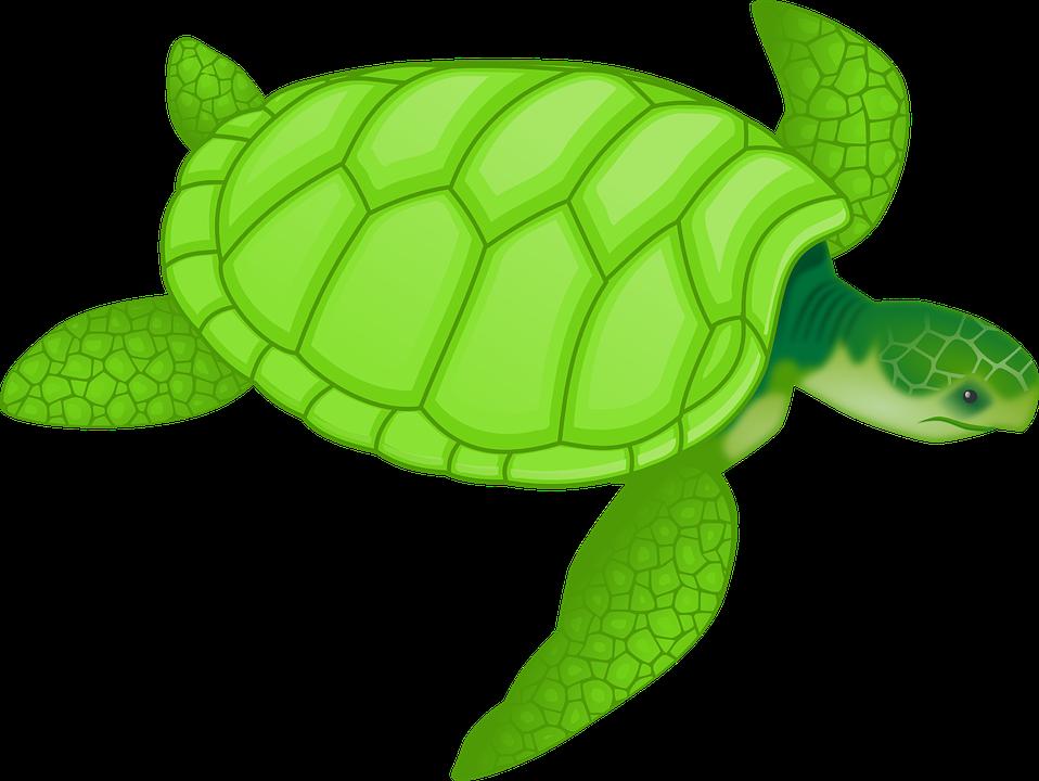 Clipart turtle mandala. Imagem gratis no pixabay