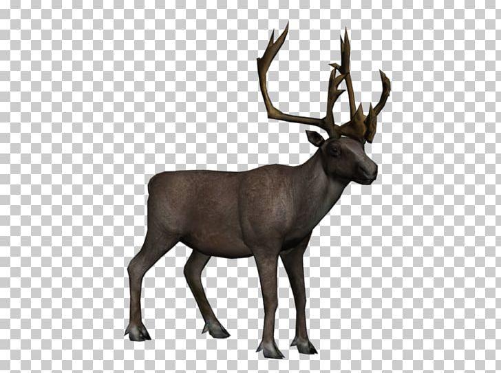 Elk tundra png animal. Clipart reindeer arctic reindeer