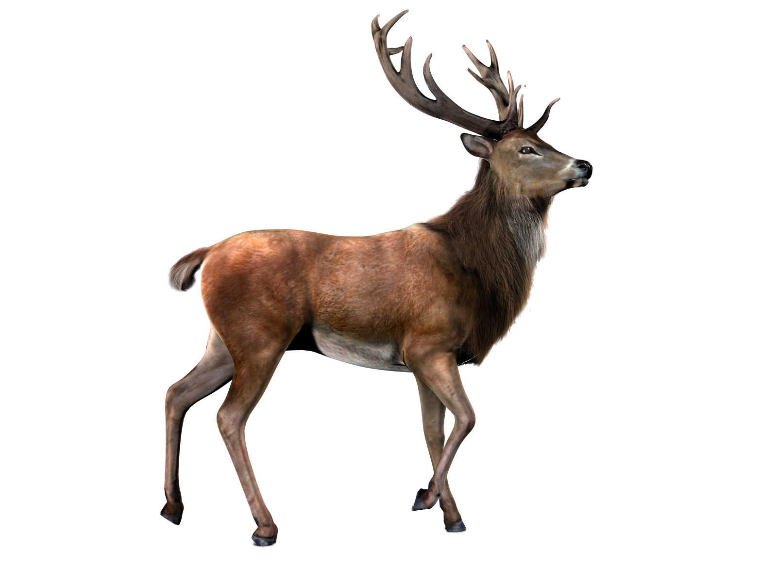 Characteristics of on emaze. Deer clipart file