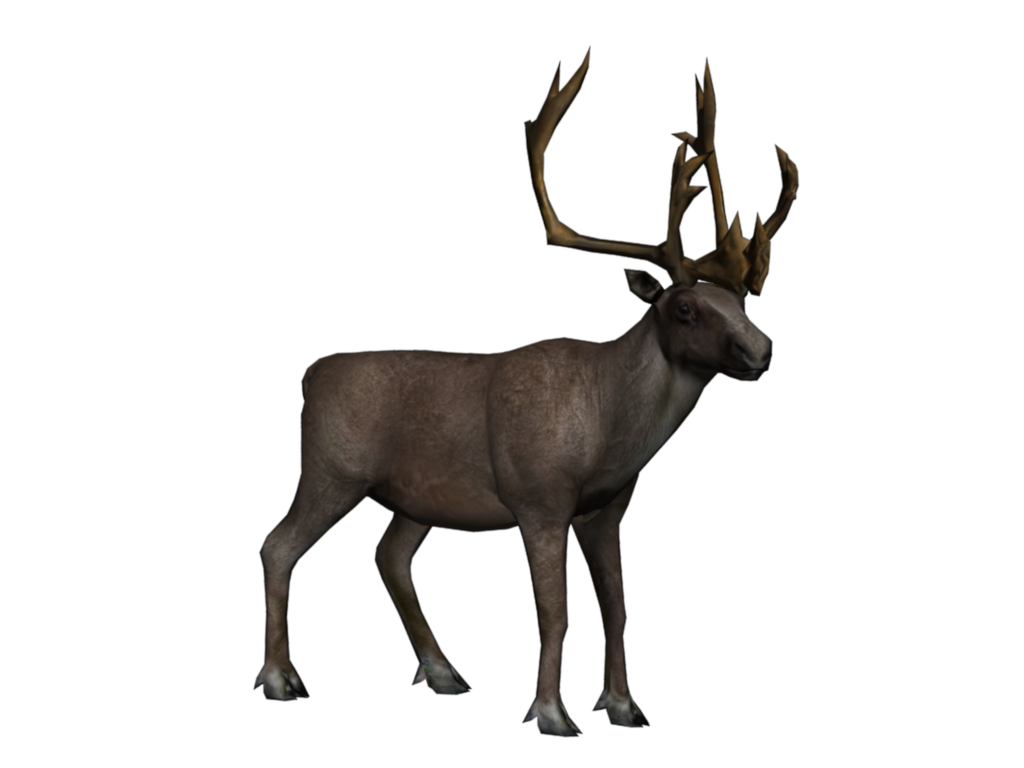 Animals yeti portraitcaribou caribou. Walrus clipart arctic tundra