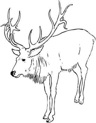Clipart reindeer arctic reindeer. Free clip art image