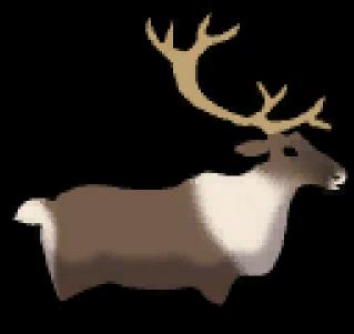 Clipart reindeer arctic reindeer. Caribou png download full