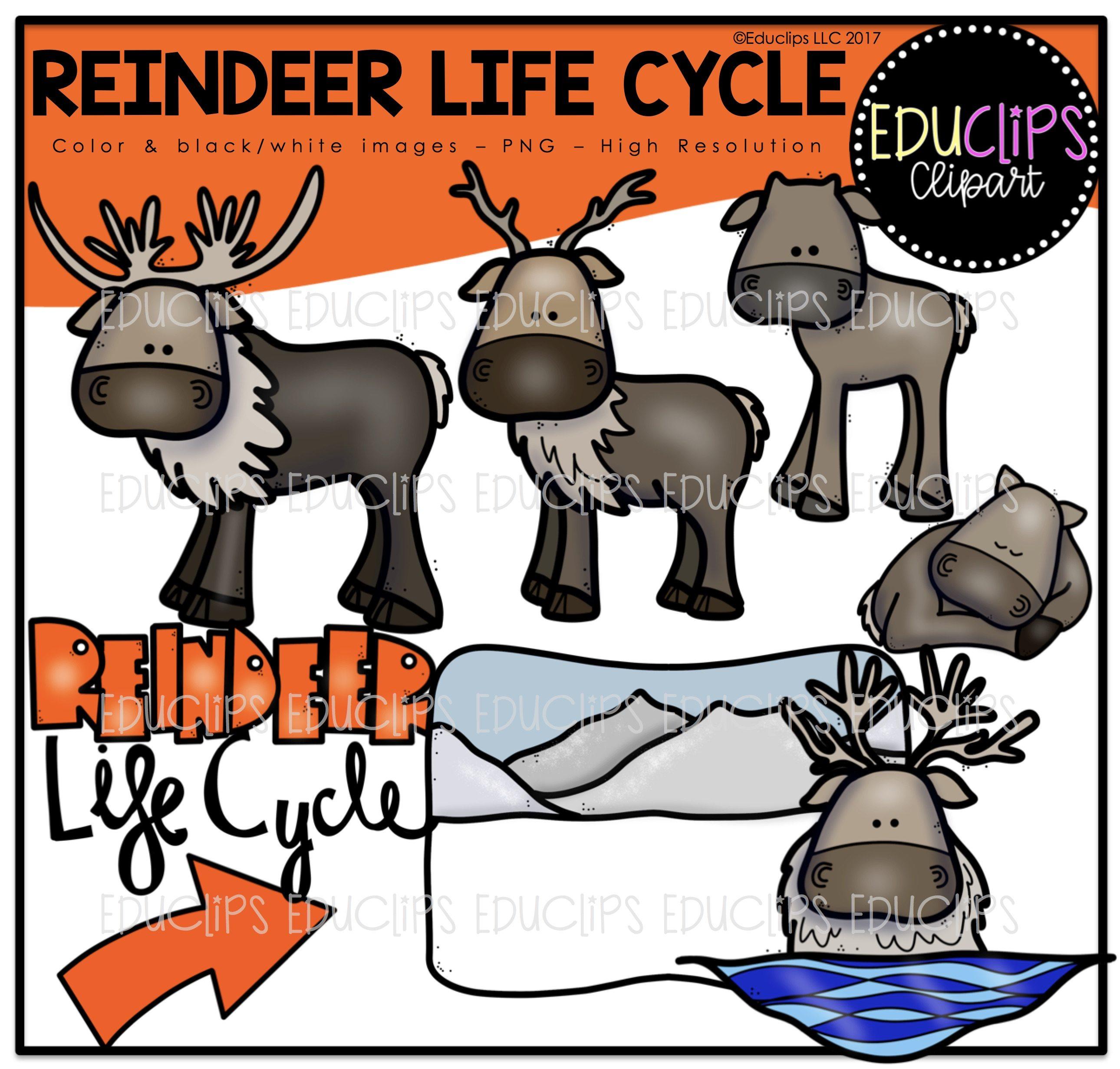 Clipart reindeer arctic reindeer. Clip art life cycle