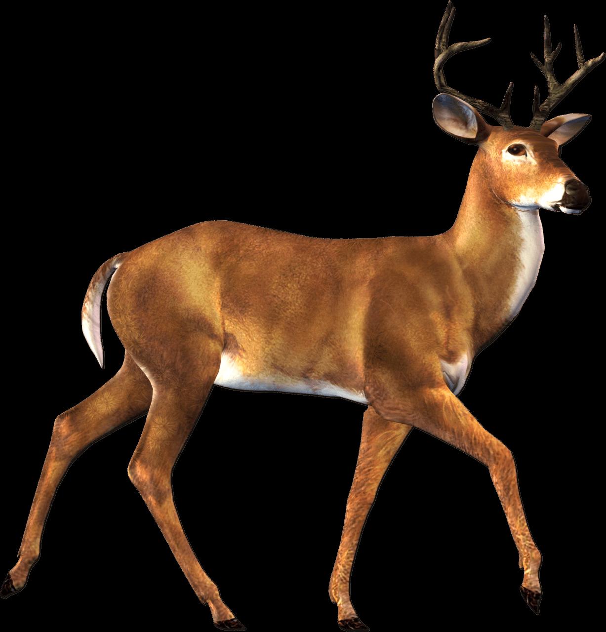 Reindeer christmas transparent png. Deer clipart real deer