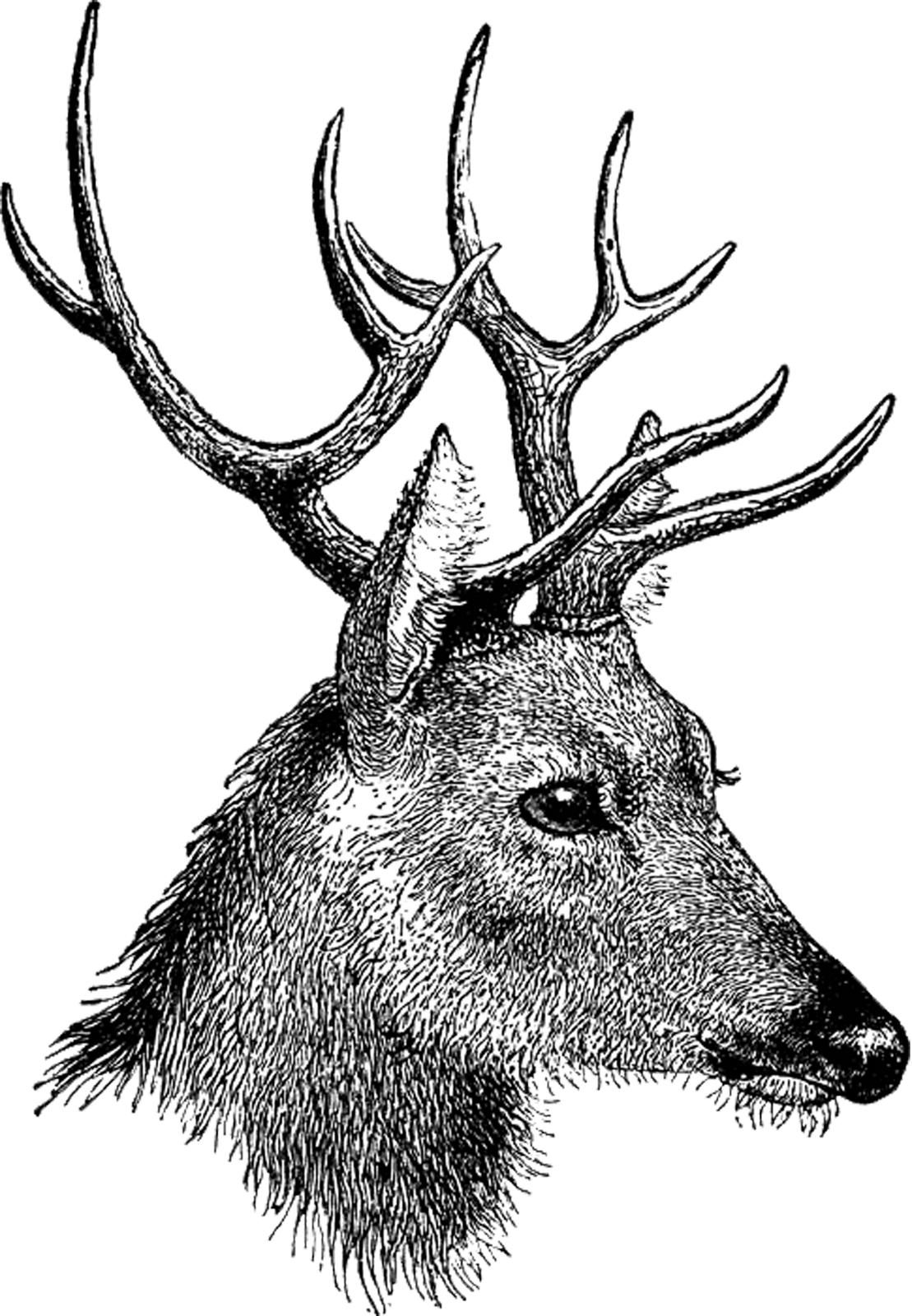 Free vintage digi deer. Stamp clipart old fashioned
