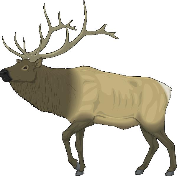 Clipart reindeer moose head. Large clip art at