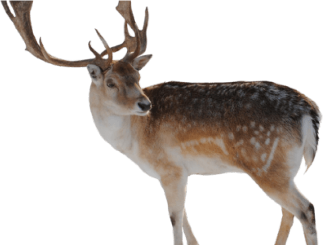 Download difference between a. Clipart reindeer rain