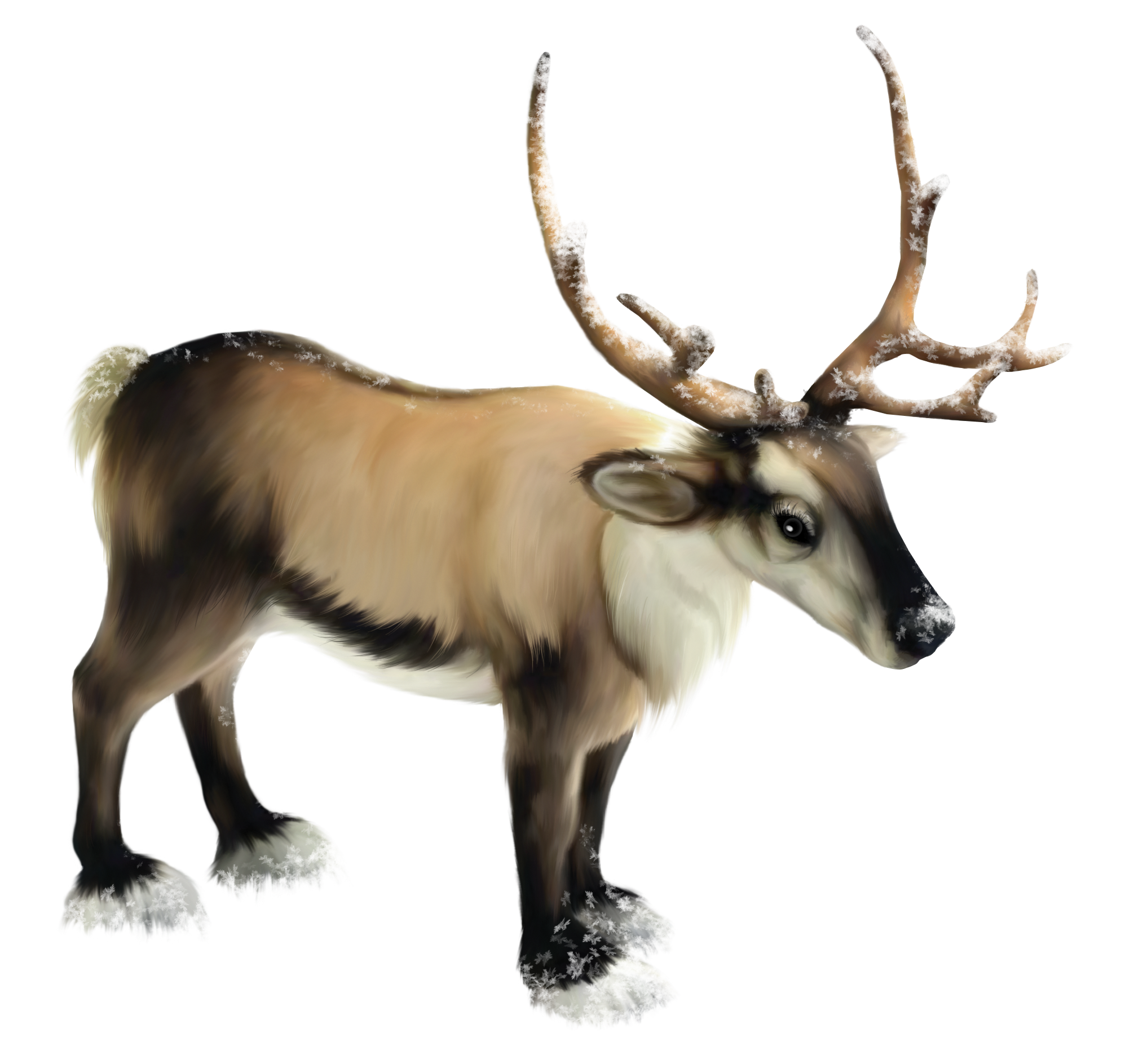Clipart reindeer realistic.  collection of high