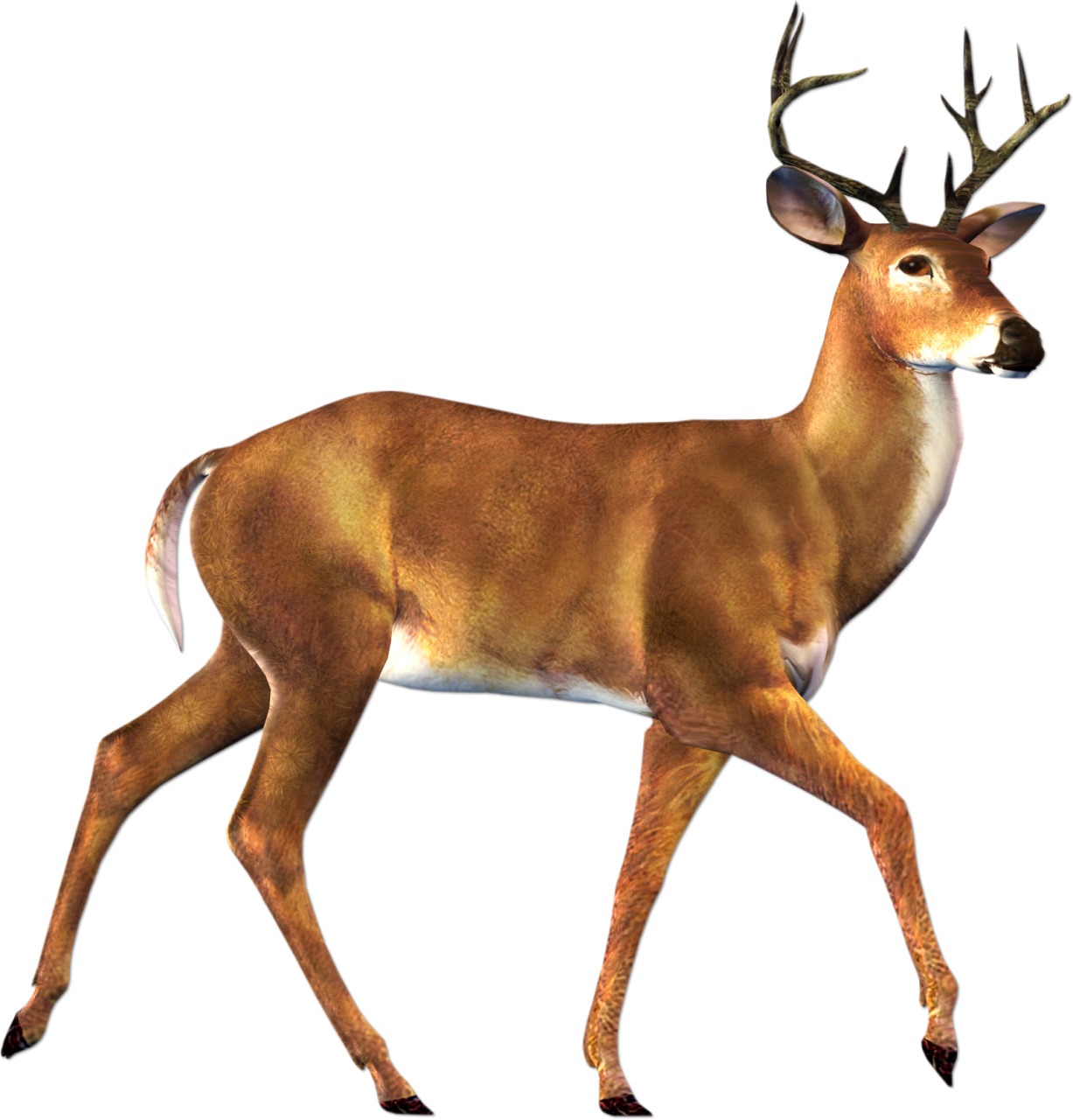 collection of realistic. Deer clipart buck