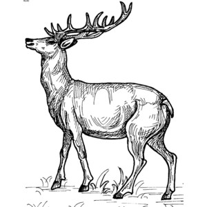 Free cliparts download clip. Clipart reindeer realistic
