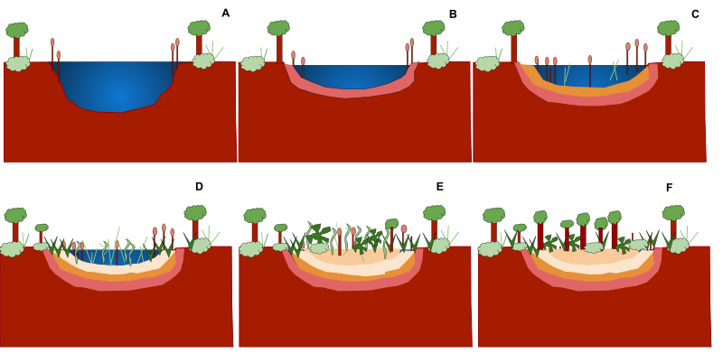 Clipart rock abiotic. Ecological succession wikiwand pond