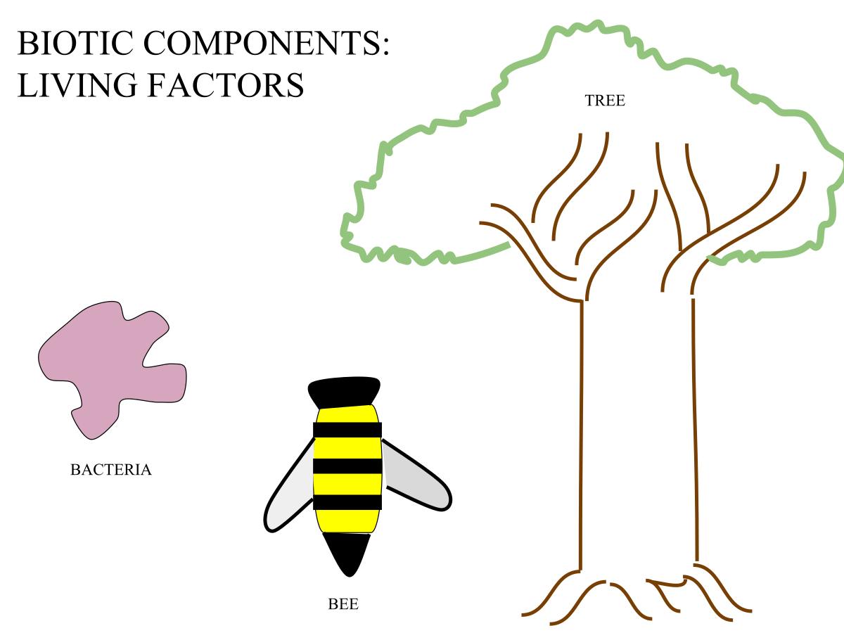 Clipart rock abiotic factor. Biotic component wikipedia