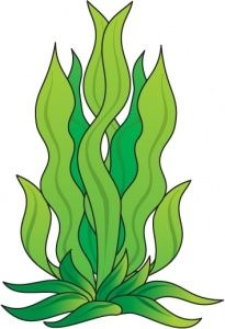 Pin by green mountain. Clipart rock seaweed